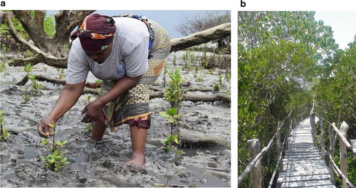 ecosystem restoration strategy