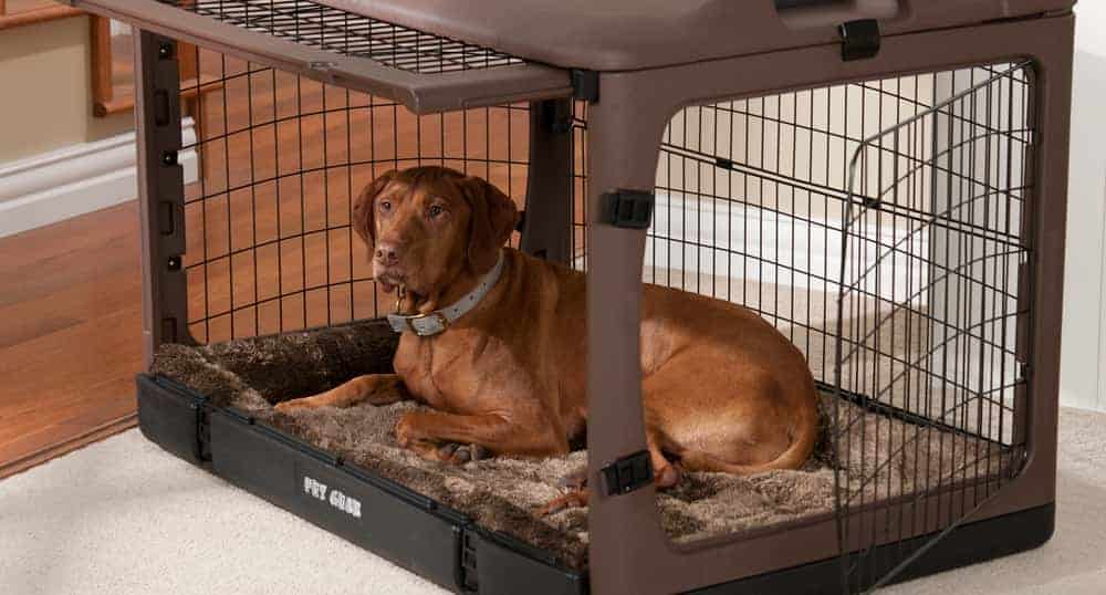 How to get your dog to love its crate