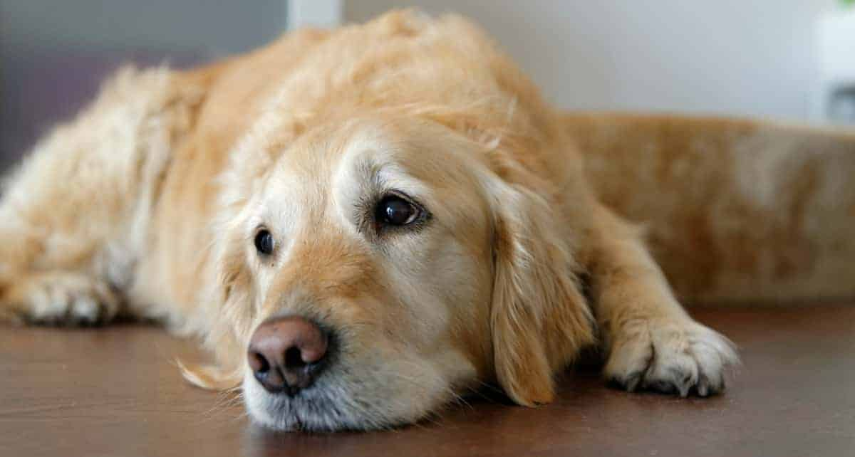 Top 8 Ways to Honor Your Pet