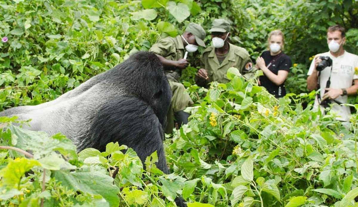 Gorilla Trekking Should be on Your Bucket List