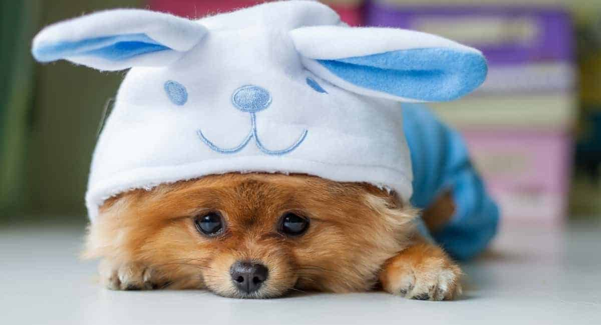 7 Pet Dressup Tips from the Pooch Fashion Pros