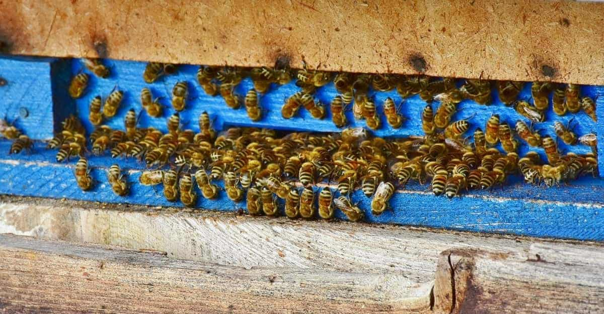 Everything You Need to Know About Getting Started Beekeeping