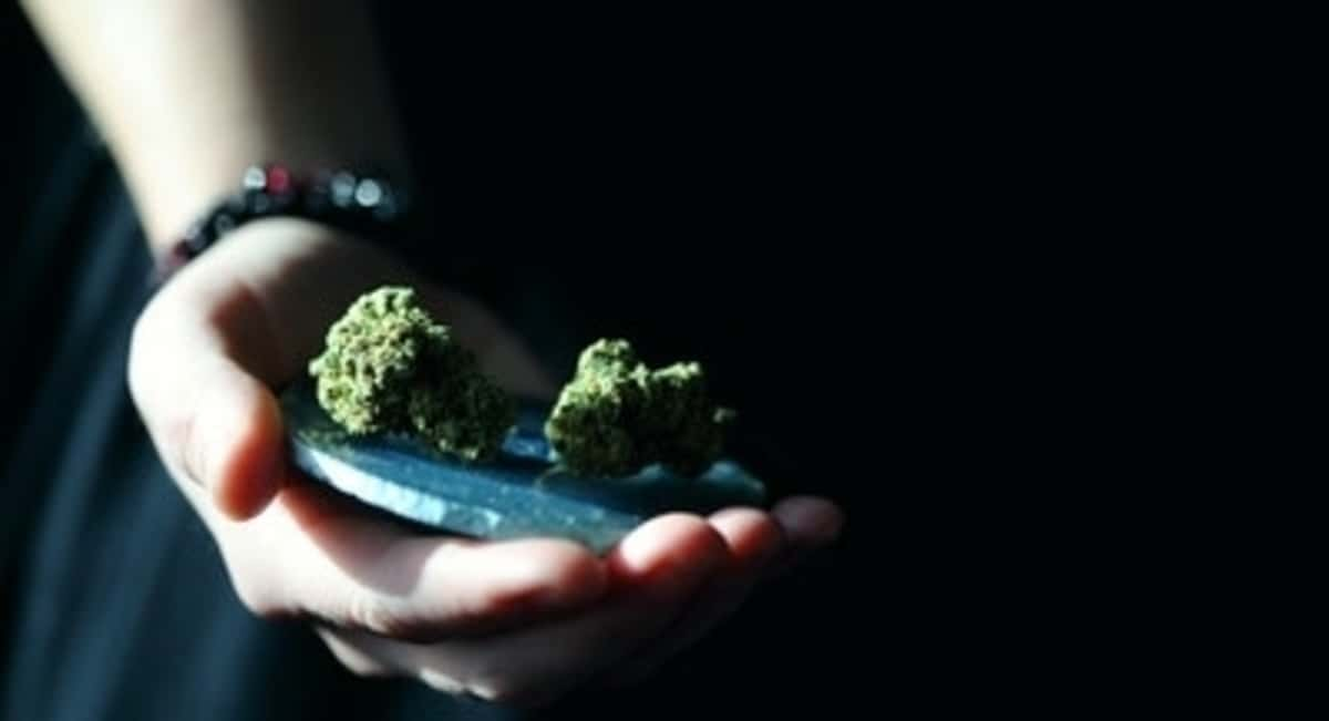 Strain of Cannabis: A Beginners Guide to Different Strains