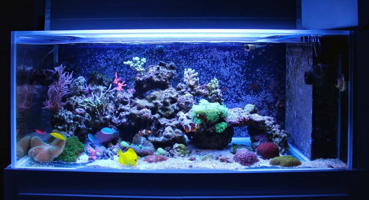 Underwater Worlds: 5 Tips for Creating a Magical DIY Aquarium