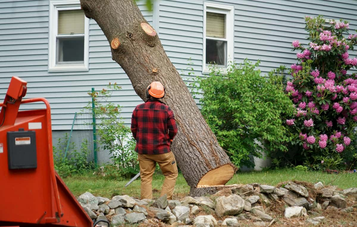 when to get a tree removed