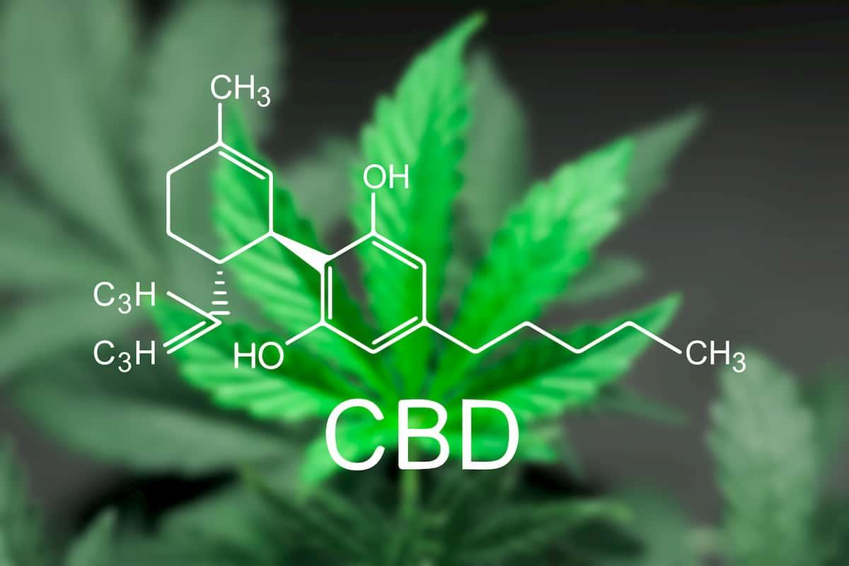 high cbd strains