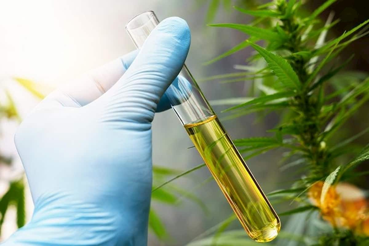CBD Oil Made and Extracted
