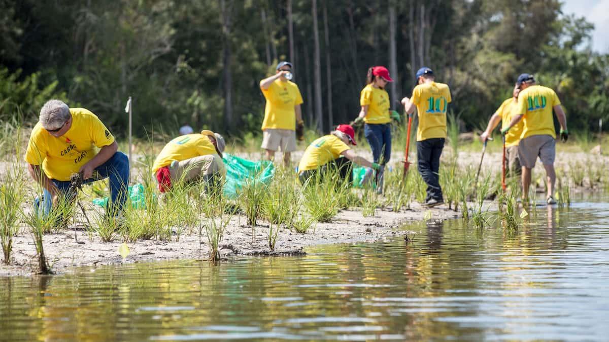 Florida wetland restoration