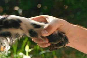 3 Extraordinary Ways Animals Improve Your Overall Well-being