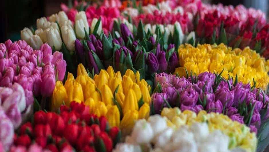Mental Health Benefits of Flowers