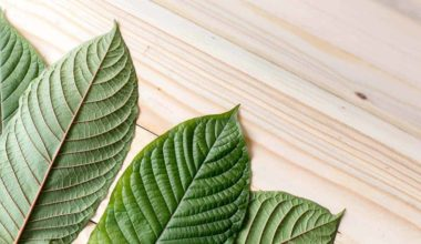 Some Say It Could Help Fight Opioid Addiction, But...Is Kratom Legal