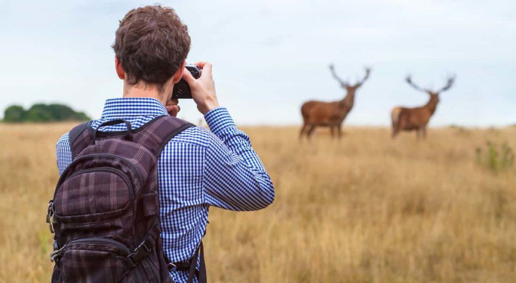 5 of The Best Places to Capture Stunning Wildlife Photographs in the World