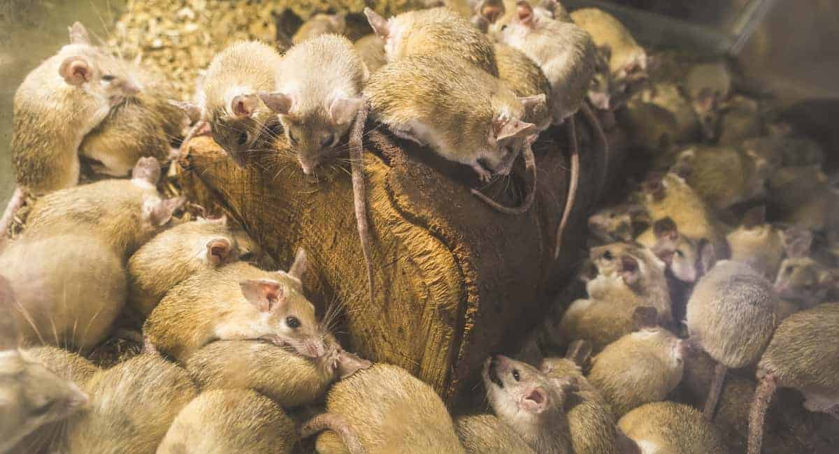 8 Telltale Signs You Have a Rodent Problem in Your Home