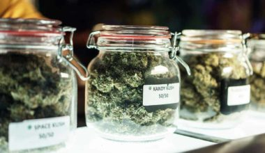 7 Must-Have Tips on Opening a Weed Dispensary