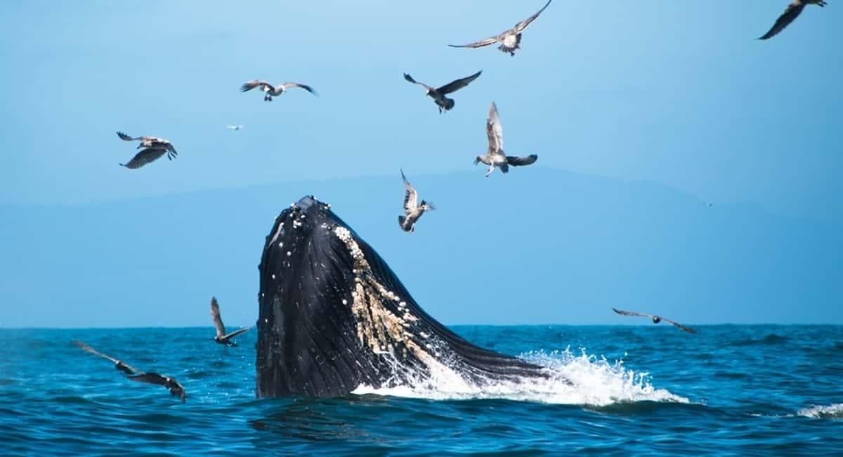biggest sea animals