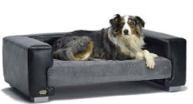 Mammoth Dog Beds are Very Lovely for Dogs