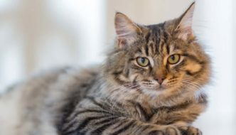 Gooey Poopy: Signs of Colitis in Cats