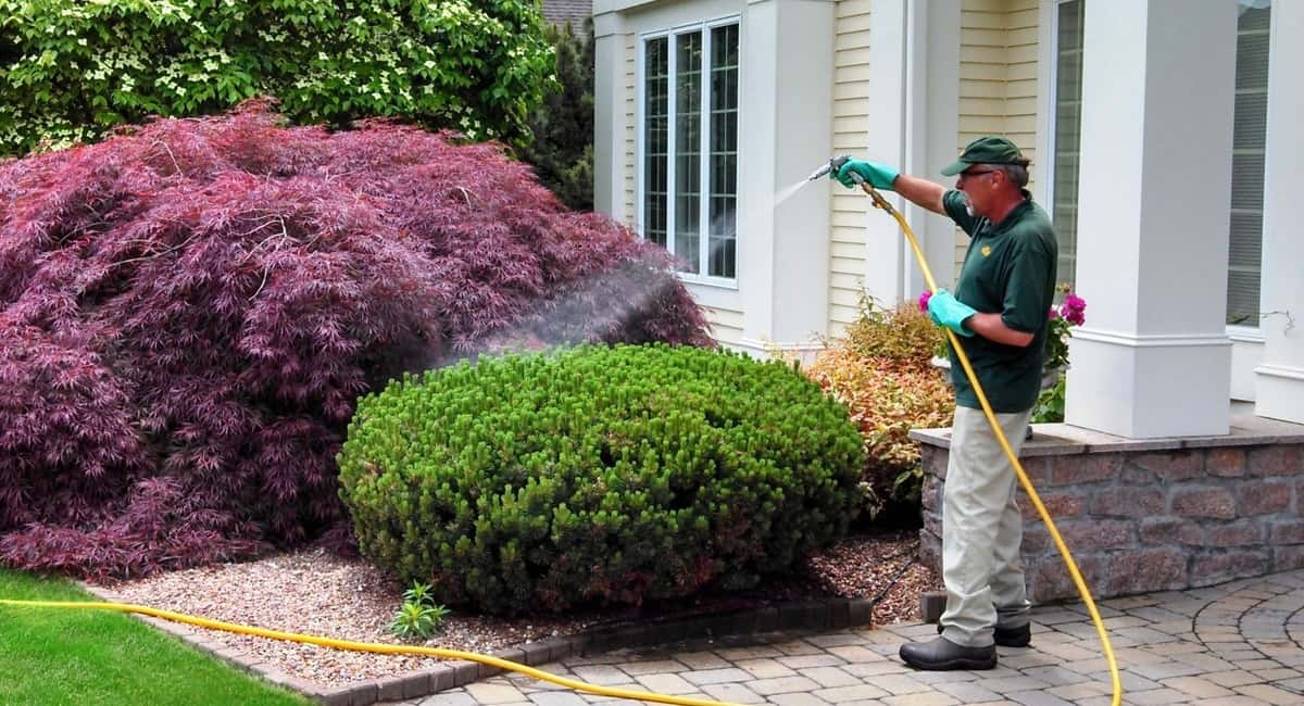 How To Take Care Of Fall Trees And Shrub Florida Independent