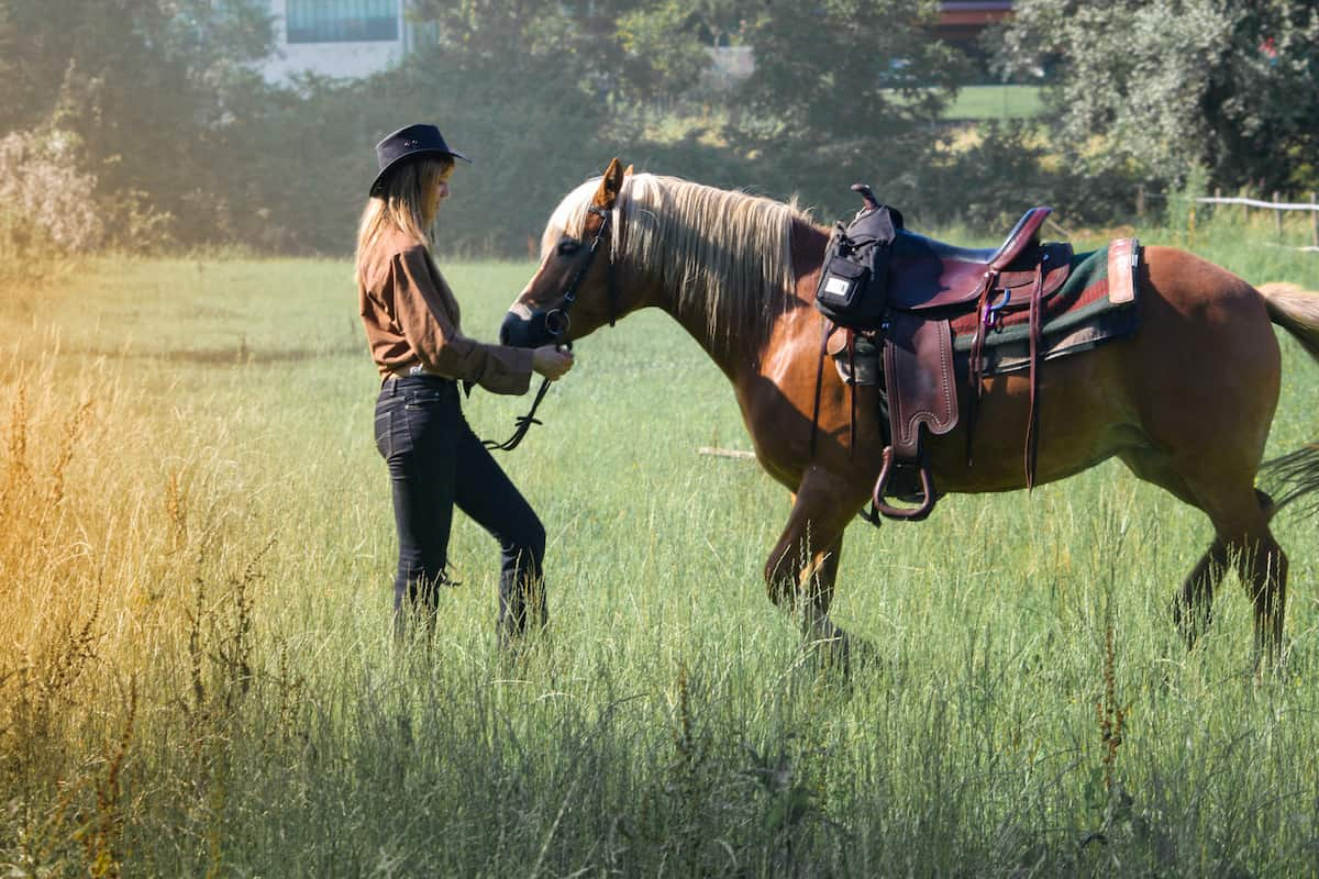 Taking Care of Your Horse