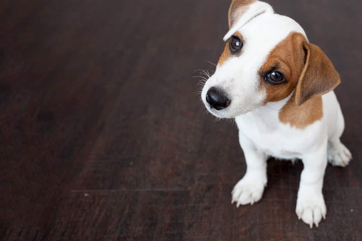 how to train an emotional support dog