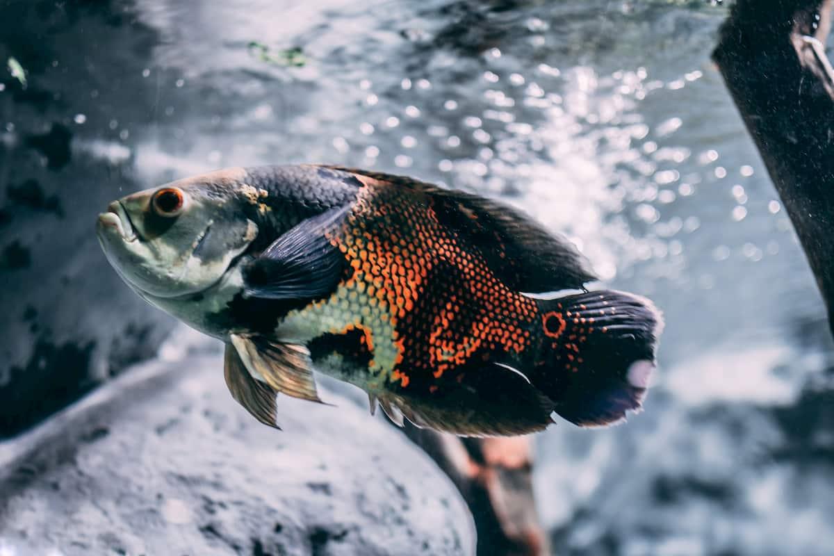 Take Care of Freshwater