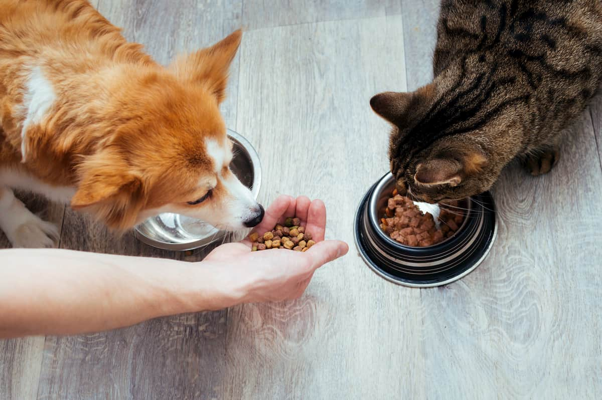 How Your Pet's Diet Can Impact