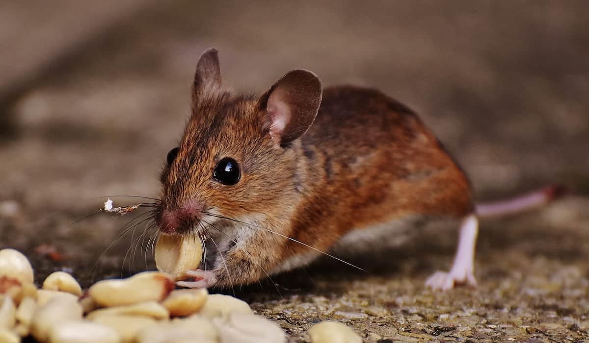 Environmentally-friendly Pest Control