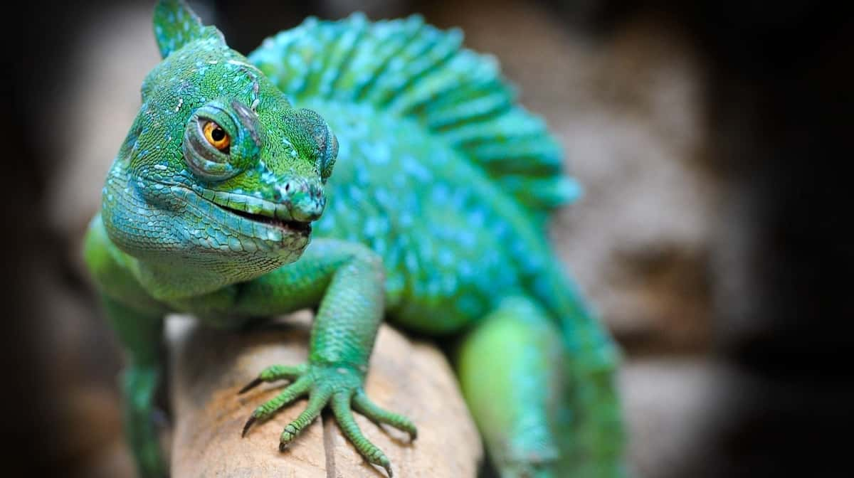 How Safe Are Pet Reptiles