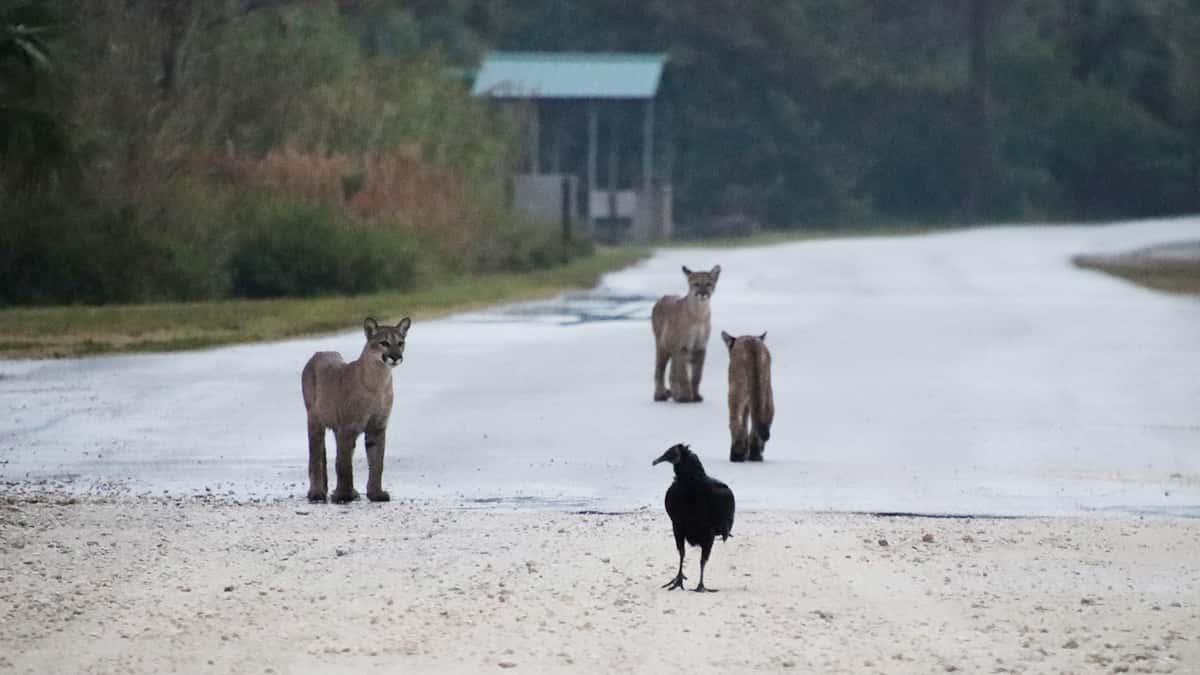 Unexpected Wildlife Visitors